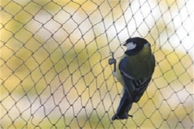 BIRD PROTECTION NETTING IN PUNE