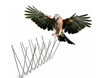 Pigeon Netting Services in Pune