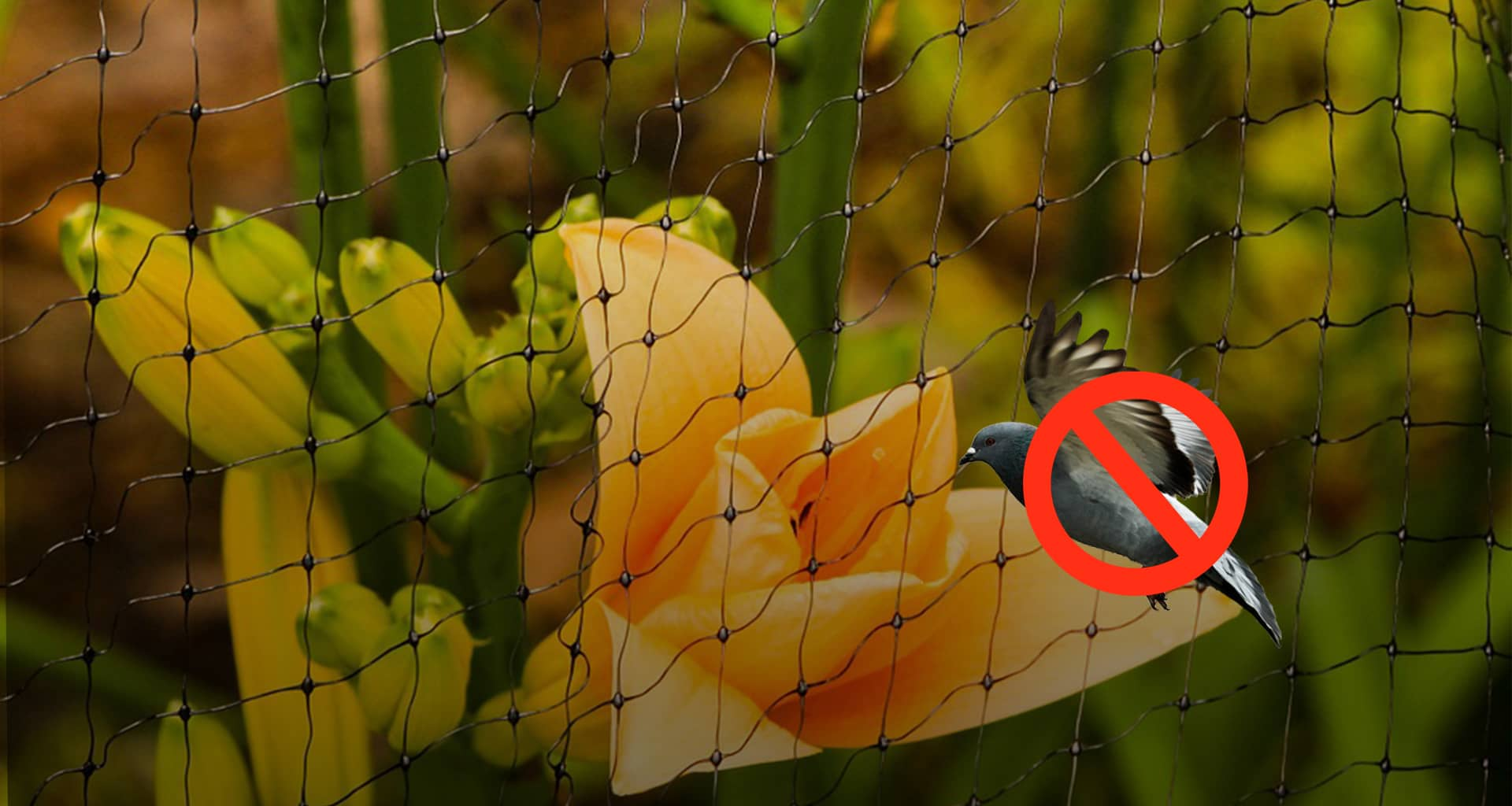 Bird Netting in Pune