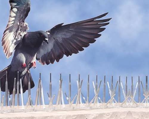 Best Ideal Bird Netting services in Pune